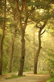Waldlichter1