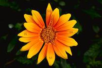Blumenuhr111005v3