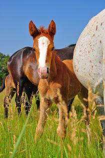 Horse von Svetlana Yukina