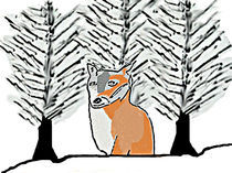 Foxes-in-the-snow-2