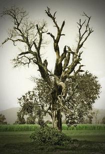 Landscape-ameca-1