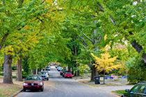 Green street. USA, Kentucky by Irina Moskalev