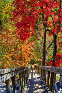 Wooden stairs in Autumn forest. USA, Kentucky von Irina Moskalev