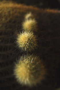 Cactus, Desert Garden The Huntington Library, San Marino, California by Brian  Leng