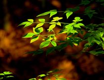Light on leaves by Brian  Leng