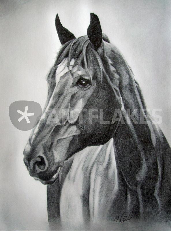 Pferdekopf In Bleistift Zeichnung Als Poster Und Kunstdruck