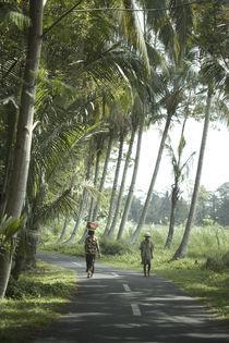 Paradise Road von Dendy Purnama