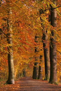 Herbstwege von Jana Behr