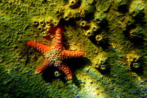 Star-fish-1