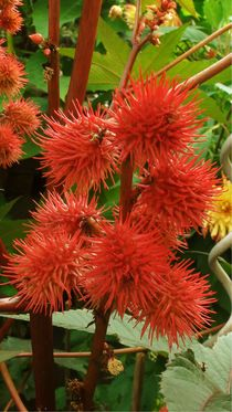 Ricinus by theresa-digitalkunst