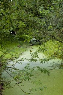 Green von Michael Beilicke