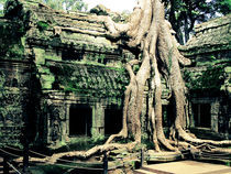 Ta Phrom Temple by Jack Knight