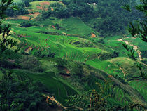 Rice terraces carved into mountainside von Jack Knight