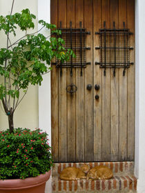 Door and two cats. Old San Juan, Puerto Rico von Irina Moskalev