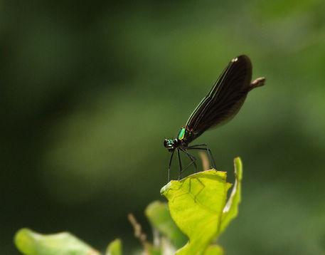 Green-pilot