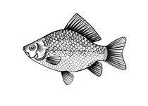 fish by Anna Ivanova