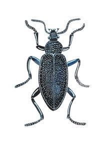 bug by Anna Ivanova