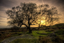 Surprise View Tree by Mal Smith