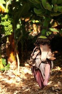Alles Banane... by Franziska Giga Maria