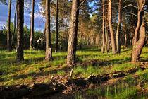 Zauberhafter Wald - Sophienstädt von captainsilva