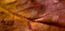 Autumn-leaf