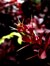 red shoots 2 by Gabriele  Nolte