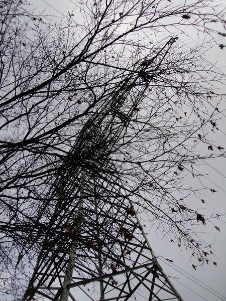 Power-tree-05