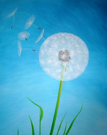 Dandelion von farbklecks