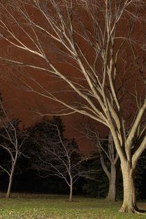 Nighttreesv