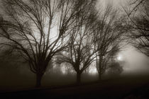 Park in Fog by Susan Isakson