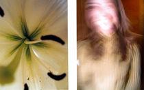 Flowers by ello-elle
