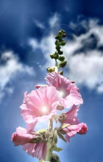 Blume-fertig-filtered23456-bearbeitet-1