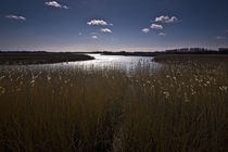River Alde Reeds by Mal Smith