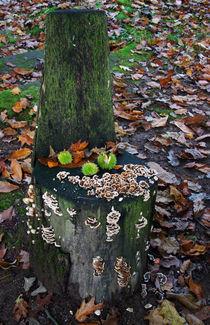Wenn der Herbst sich nieder setzt von Wolfgang Dufner