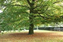 Autumn in Hilversum by Alex Voorloop
