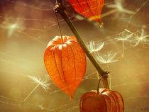 Herbstlich(t) von Franziska Rullert