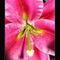 Blooms-0009-resize-2