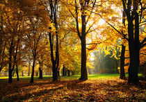 Autumn / Herbst by Martin Krämer