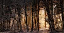 Wintermorgenlicht by Norbert Maier