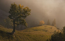 Frühherbstmorgen von Norbert Maier