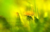 Sommerwiese von Norbert Maier