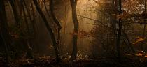 Herbstmorgen von Norbert Maier