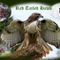 Red-tailed-hawk-on-oak-bough-montage