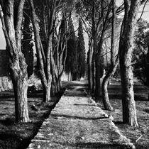 Magic Garden von Martin Krämer