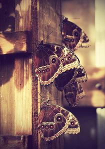 butterflies von Agata Luczyna