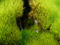 Green Furr by S A