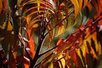 'Herbstfarben' by Elke Balzen