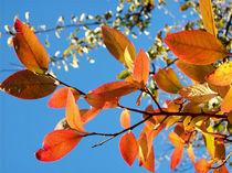 Herbstgruss, bunte Blätter, Herbst by Simone Cuambe