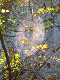 Dreamcatcher2 by Martha Abell