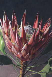 Protea Blossom by Greta Schimmel